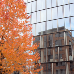 commercial property during the autumn